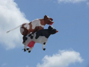 Flying-Cowcouple